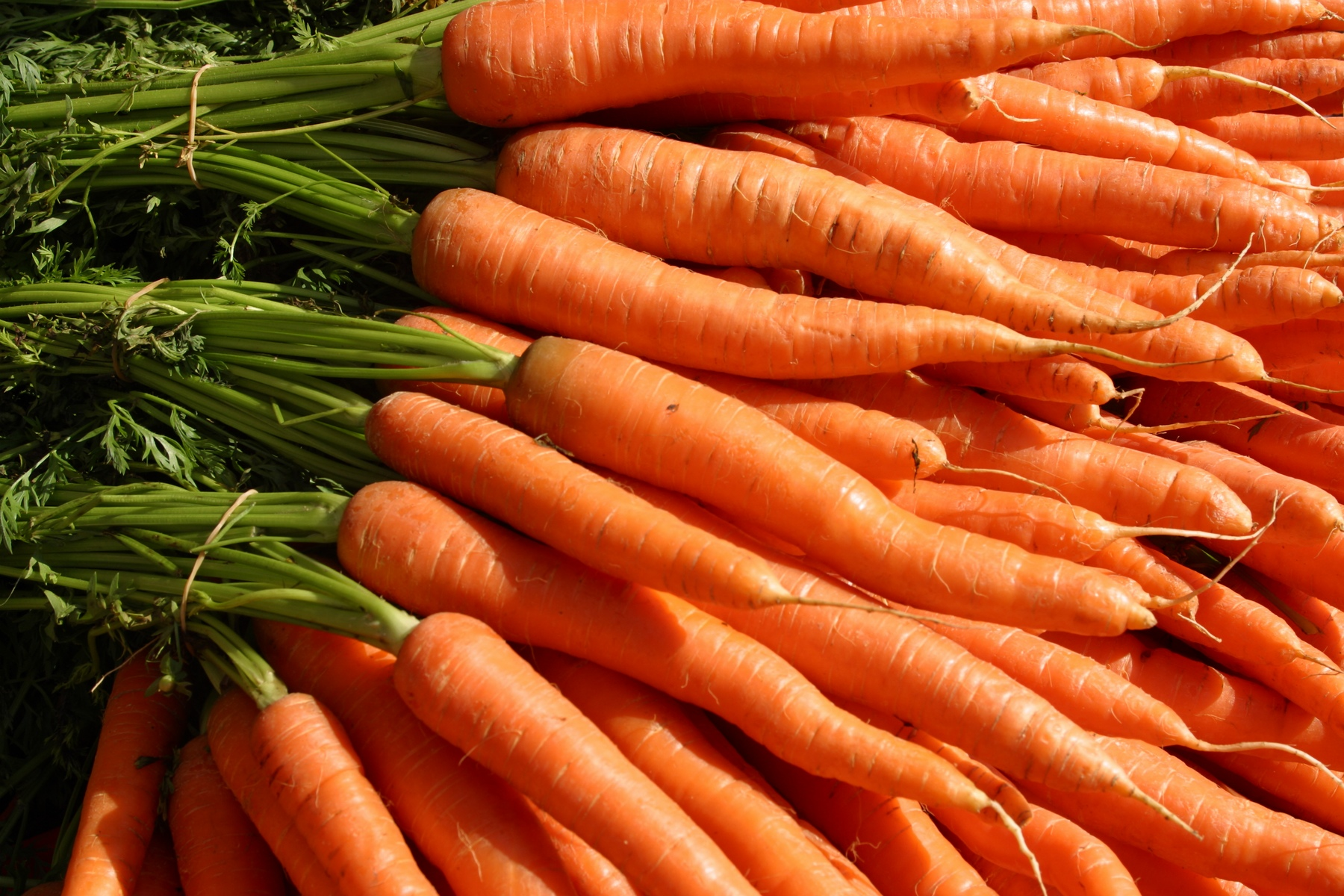 uses and benefits of organic carrot seed essential oil